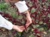 farming-july-oct-09-058