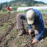 Finally! Planting Rosencrantz lettuce!